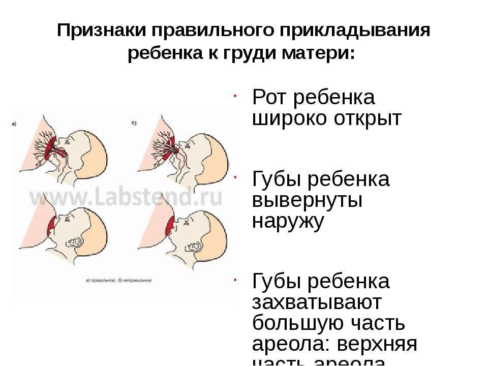 Боли в грудях при кормлении   что делать, если болит грудь при кормлении?   лечение боли и симптомы болезни на eurolab