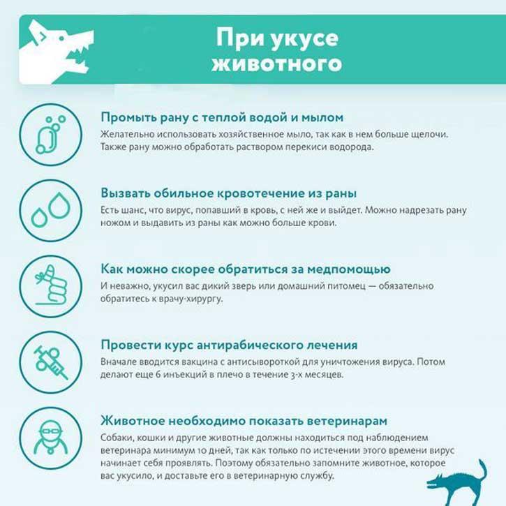 Что делать, если вас укусила собака? - medical insider