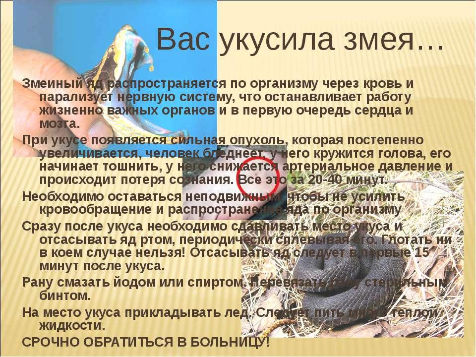 Укусила ядовитая змея: что делать, как оказать помощь, последствия укуса