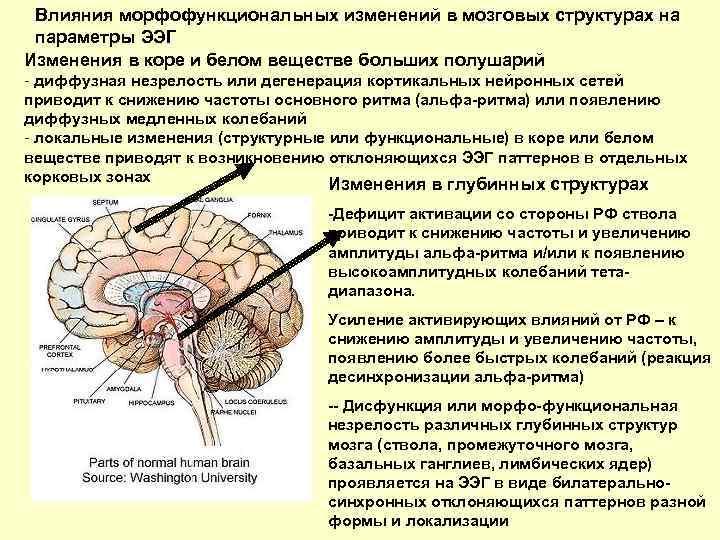 Гипоксия у новорожденных и детей старшего возраста   доктор квант