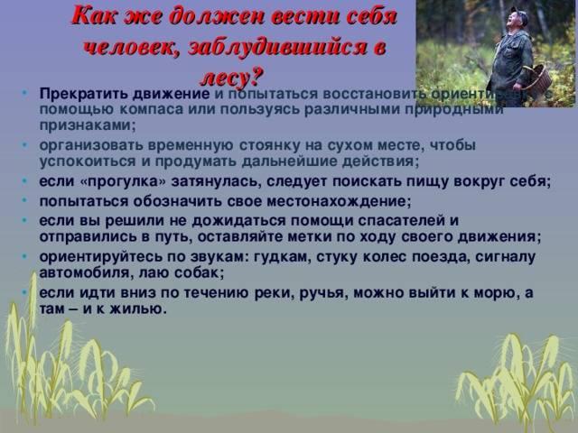 Памятка ребенку, если заблудился в лесу - дети в безопасности