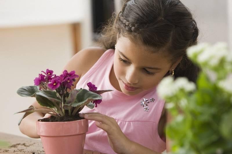 Цветы для детской комнаты какие полезны - theflowers