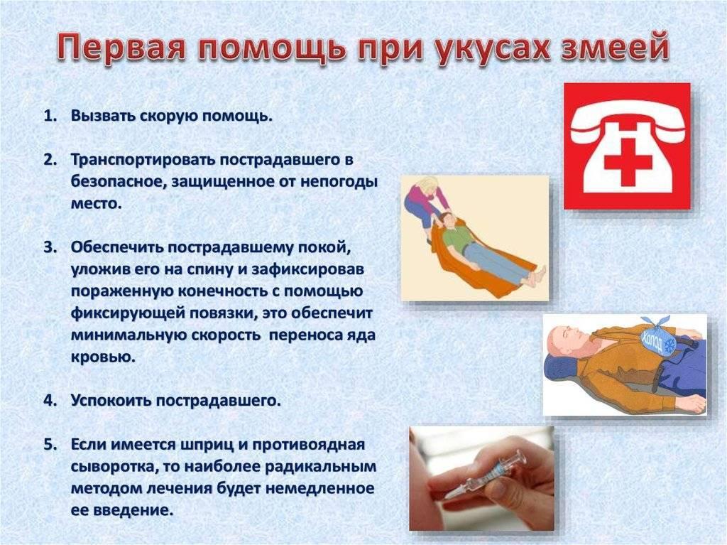 Укус гадюки обыкновенной и анафилаксия. экстренная помощь