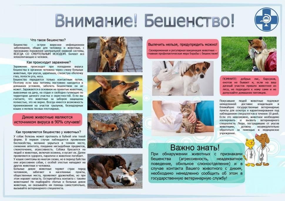 Бешенство – смертельная опасность. что делать, если укусила собака или другое животное?