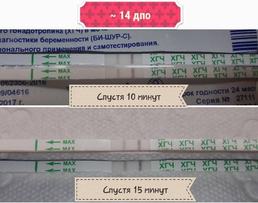 Уровень хгч в моче по дням от зачатия, тест на беременность - kardiobit.ru