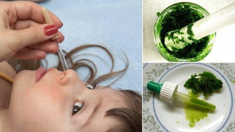 Лечебные свойства каланхоэ при лечении от насморка, как принимать