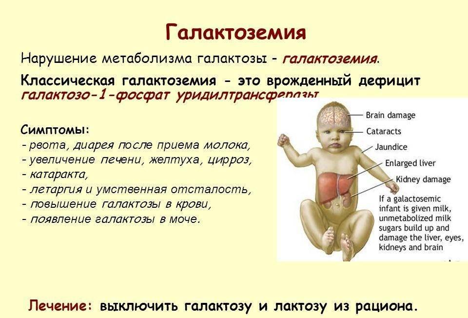 Тимус – что это? роль тимуса на первому году жизни ребенка   медицинский центр «президент-мед»
