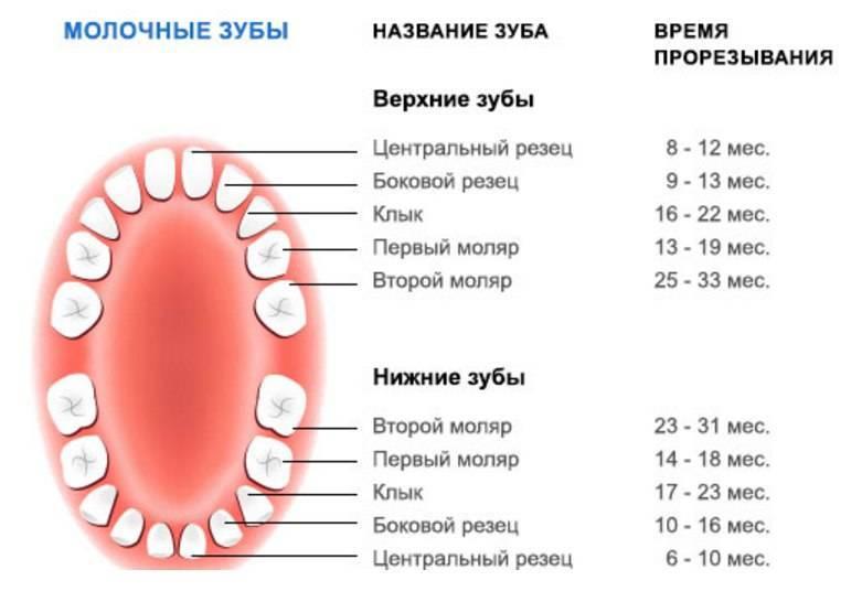 Когда и как молочные зубы смениваются постоянными