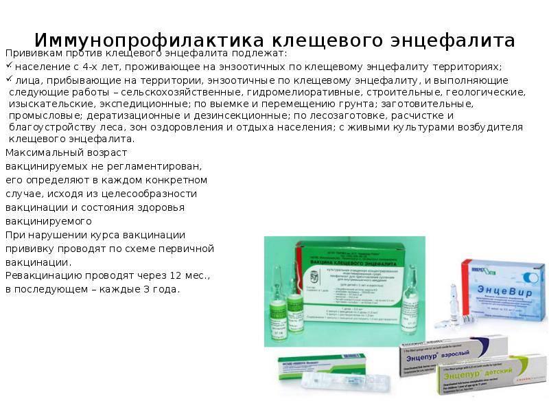 Прививка от клещевого энцефалита: схема вакцинации детям и взрослым