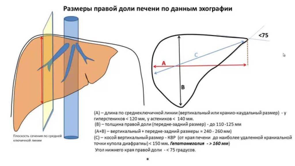 Какие размеры печени должны быть у детей: таблица норм квр, параметров воротной вены и других показателей по узи