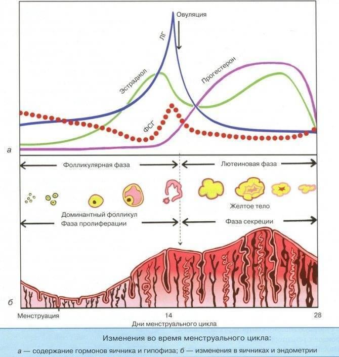 Прогестерон – гормон беременности. анализы и норма для беременных