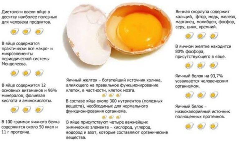 Когда можно давать белок яйца малышу | главный перинатальный - всё про беременность и роды