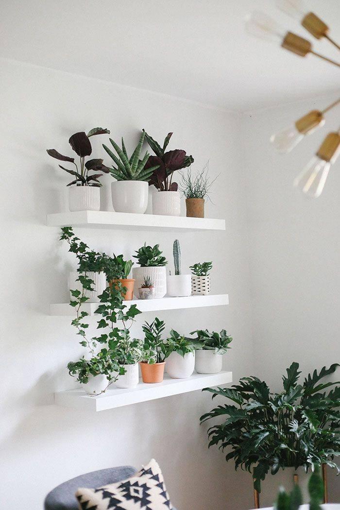 12 лучших растений для детской комнаты с названием, фото и описанием