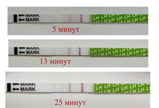 Фраутест на беременность : инструкция по применению | компетентно о здоровье на ilive