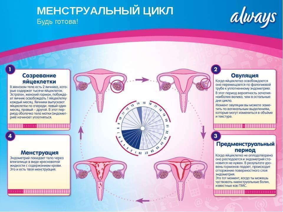 Первые месячные у девочки – что нужно знать родителям | детский эндокринолог