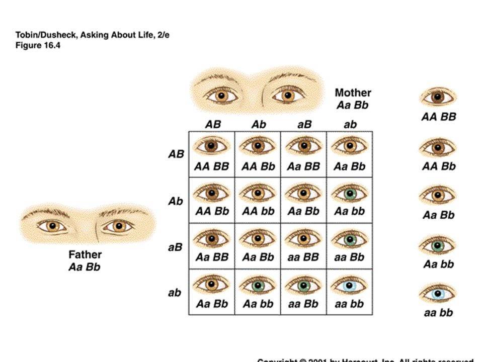 Топ самых необычных цветов глаз