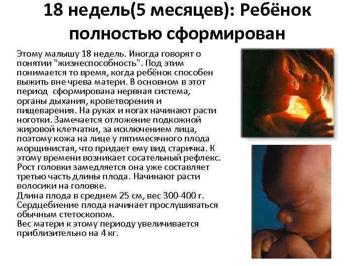 «эмбрион» не равно «человек». почему аборт нельзя приравнивать к убийству - burning hut
