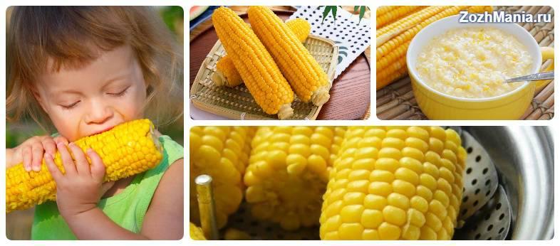 Вред и польза кукурузы