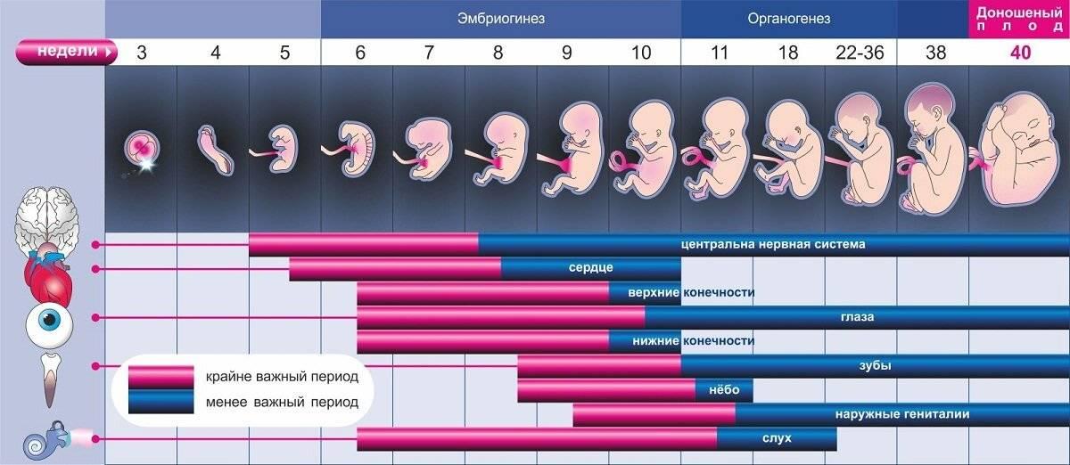 На каком сроке можно почувствовать шевеления ребенка при второй беременности?
