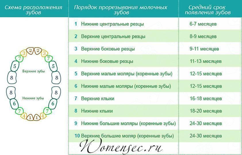 Зубы у детей: порядок прорезывания, сроки прорезывания зубов - krasgmu.net