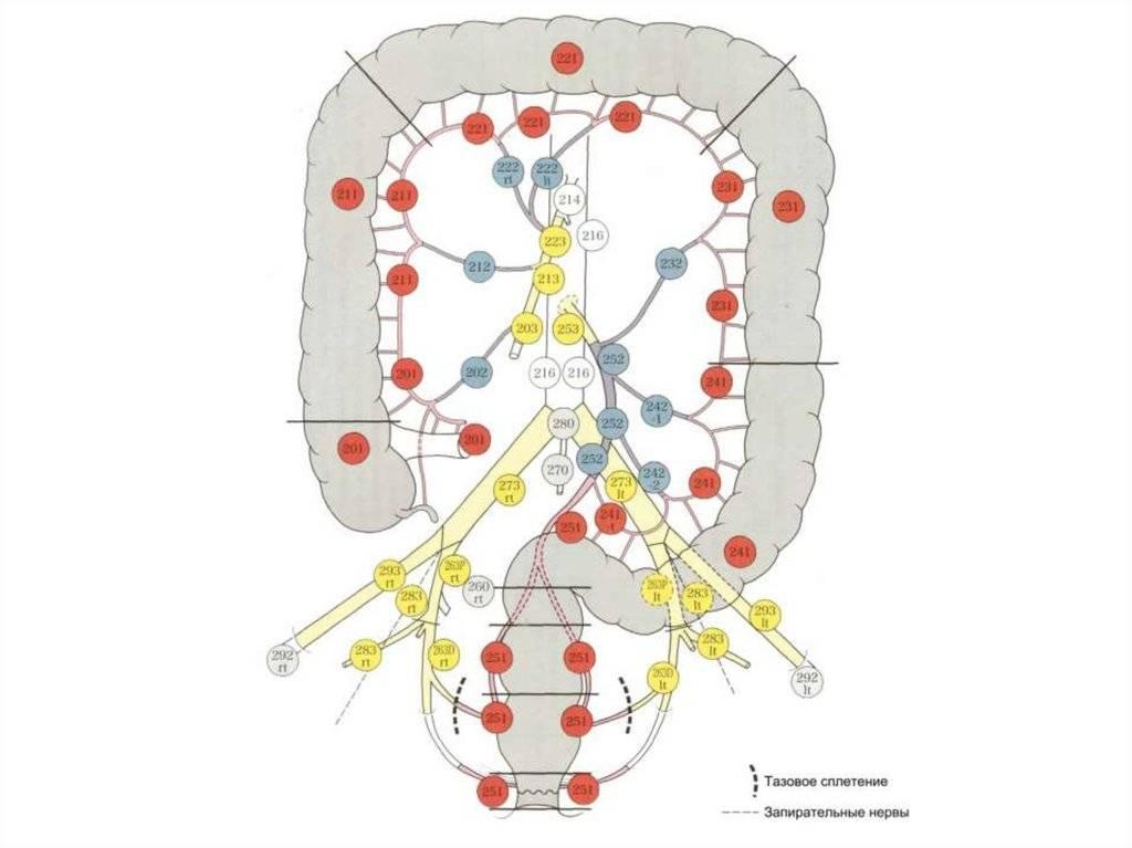 Лимфаденит: лечение воспаления лимфоузлов