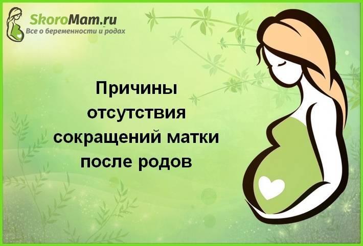 1 день после переноса эмбрионов