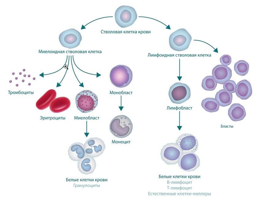 Что такое лейкемия и лейкоз? причины. диагностика и лечение.