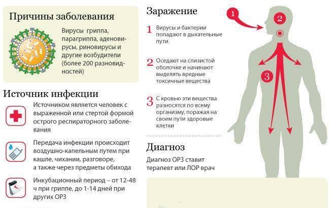 Вирус герпеса 6 типа, днк hhv 6 т. колич. в крови