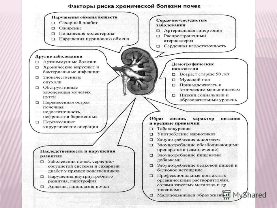 Ультразвуковое исследование (узи) почек