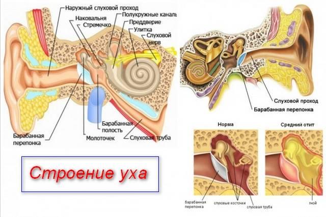 Острый тубоотит: причины, симптоматика, медицинская помощь