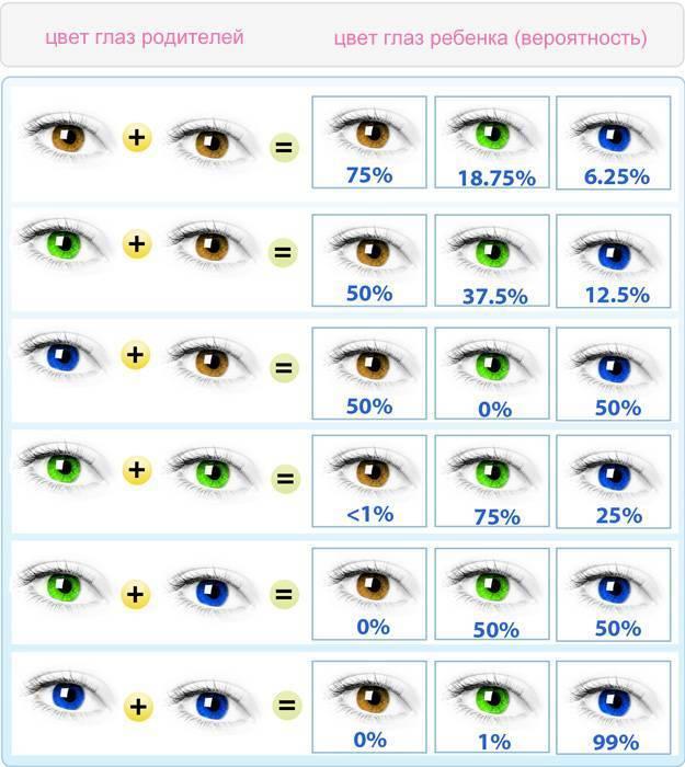 Через сколько у младенцев меняется цвет глаз или во сколько месяцев меняется цвет глазок у детей и от чего это зависит • твоя семья - информационный семейный портал