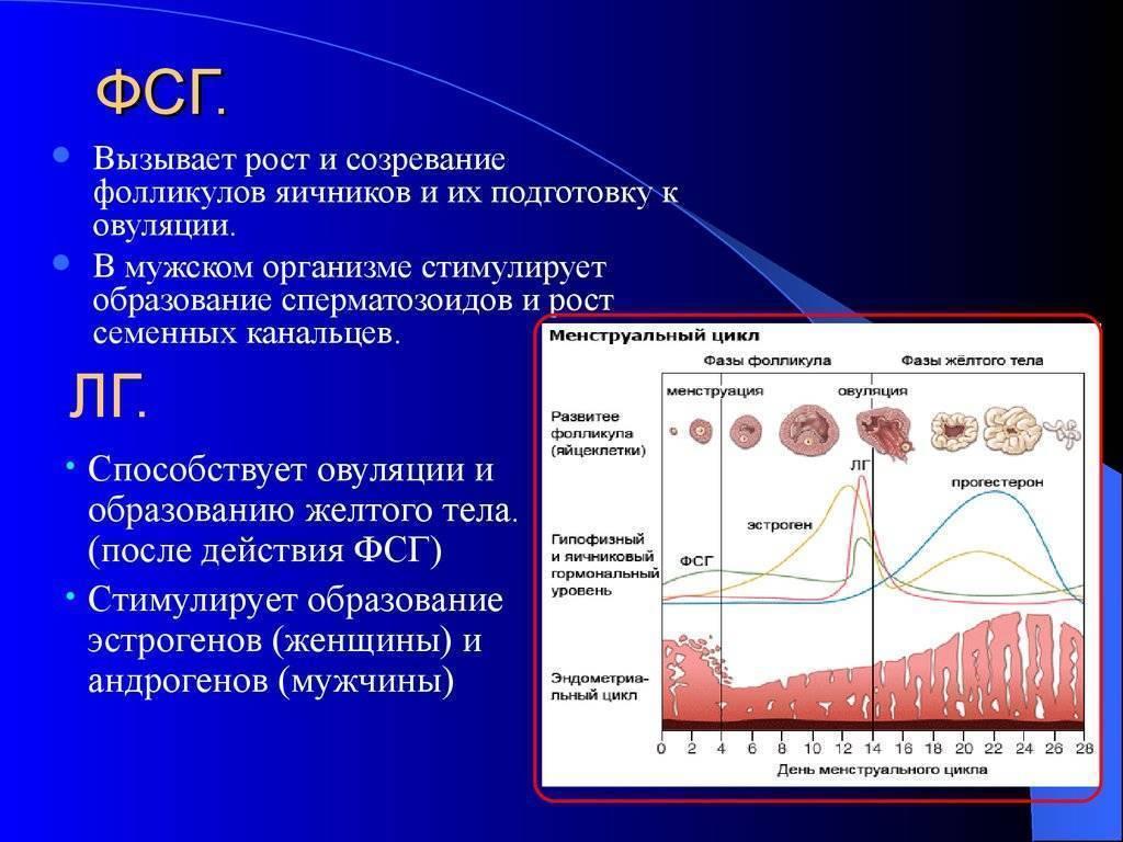 Лютеинизирующий гормон (lн)