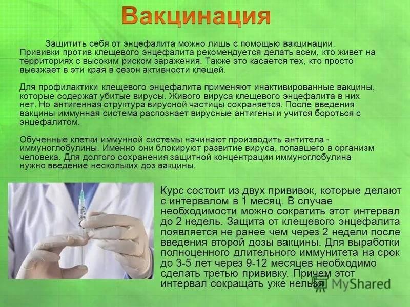 «клещ-э-вак» вакцина клещевого энцефалита | инструкция по применению | купить в ммк формед - прямые поставки