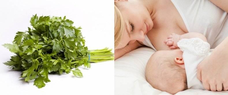 Какую зелень можно кушать кормящей маме — петрушка, укроп и зеленый лук во время грудного вскармливания