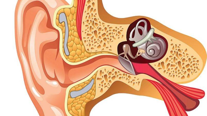 Негнойный средний отит                (воспаление среднего уха, отит средний аллергический)