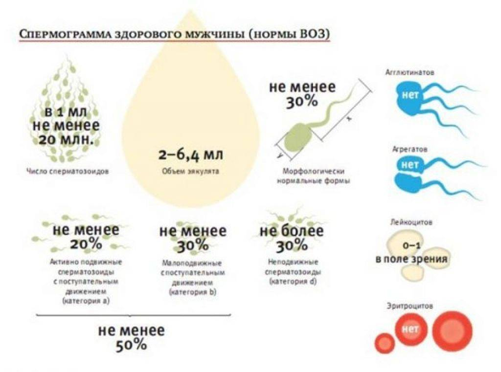 Причины плохой спермограммы: анализ, результаты, как улучшить, отзывы