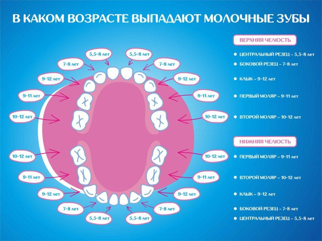 Зубы у детей: порядок прорезывания, признаки и сроки