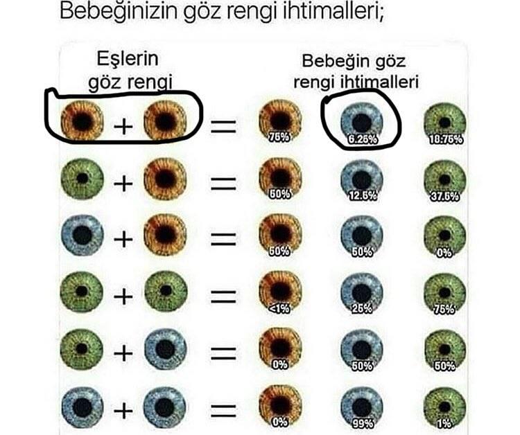 С каким цветом глаз родится ребенок: определение цвета глаз, генетическая наследственность и закон менделя