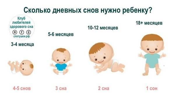 Сколько должен съедать ребенок в 5-6 месяцев и как разнообразить его меню