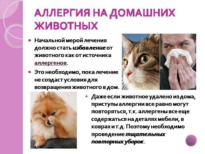 Аллергия на кошек у ребенка - признаки, причины, народные методы лечения