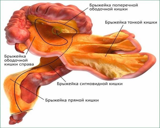 Увеличенные лимфатические узлы — лимфаденопатия
