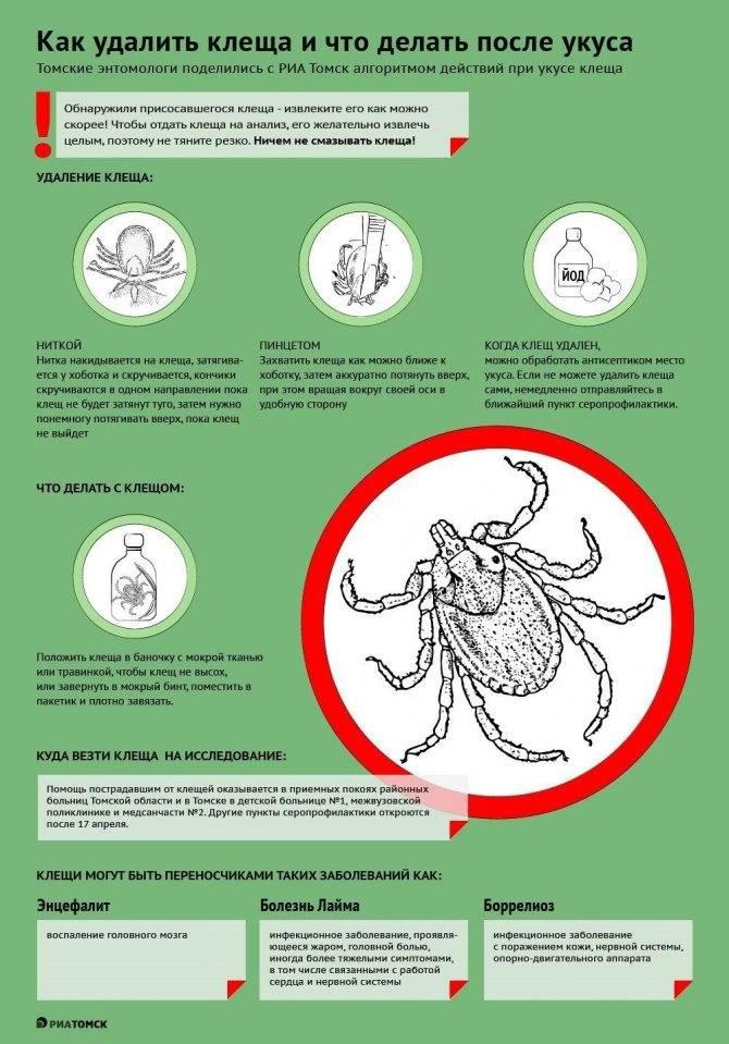 Что делать, если укусил клещ ребёнка – фото укусов, какие меры срочно предпринять, как помочь и как избавиться от паразита