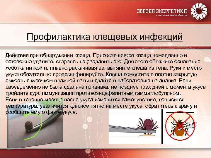 О профилактике «клещевых» инфекций - алгоритм действий при укусе клещом - роспотребнадзор (стенд)