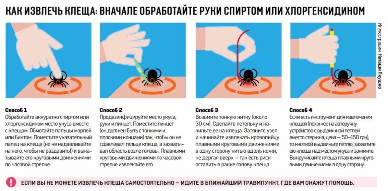 Фото и симптомы укуса клеща у человека, через какое время появляются симптомы