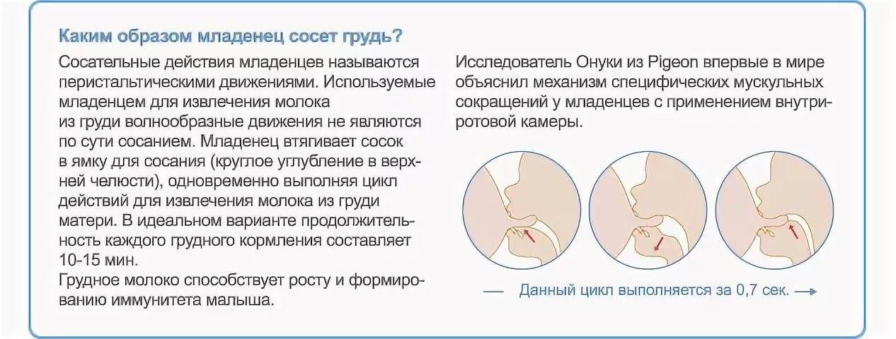 Способы и средства для прекращения лактации - топотушки