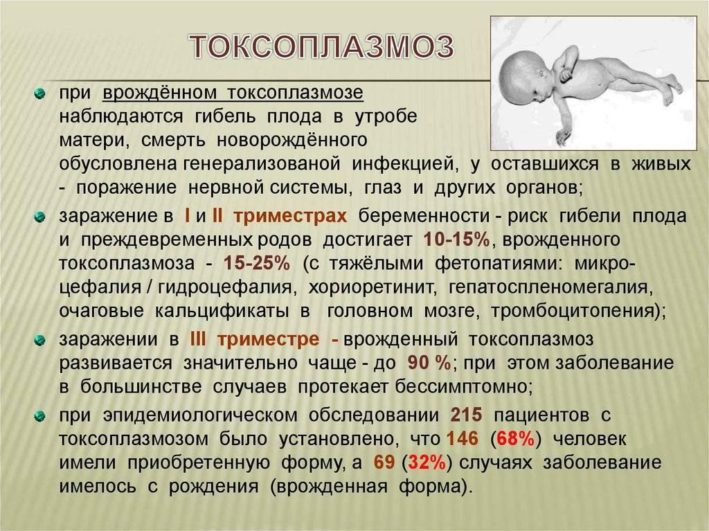 Токсоплазмоз. лечение токсоплазмоза - медицинский центр «эхинацея»