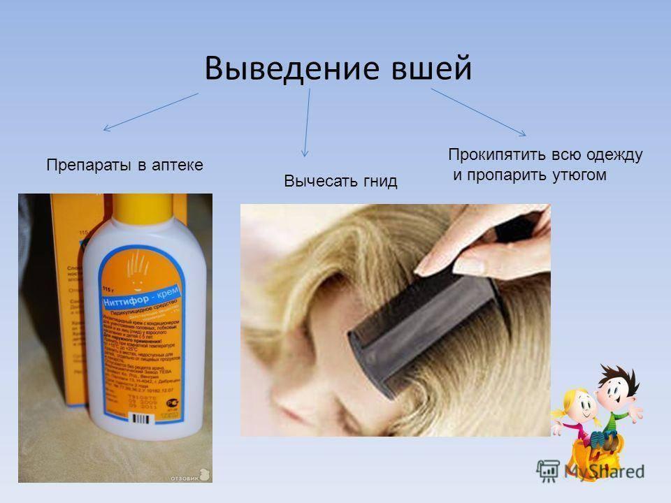 Дезинфекция при педикулезе: обработка от вшей и гнид