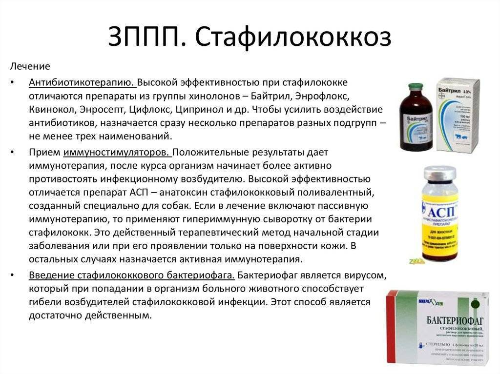 Симптомы золотистого стафилококка у детей, способы передачи и лечение инфекции