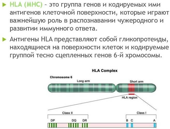 Что такое система hla