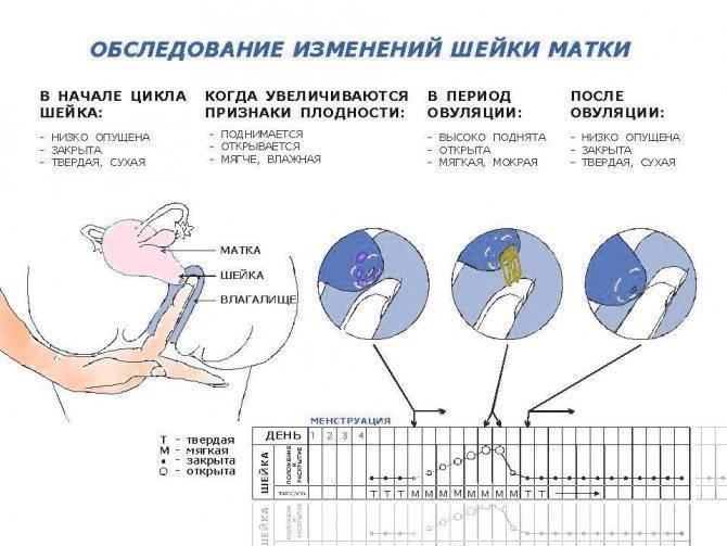 Тошнота и головокружение во время овуляции: о чем говорят эти симптомы в середине цикла?